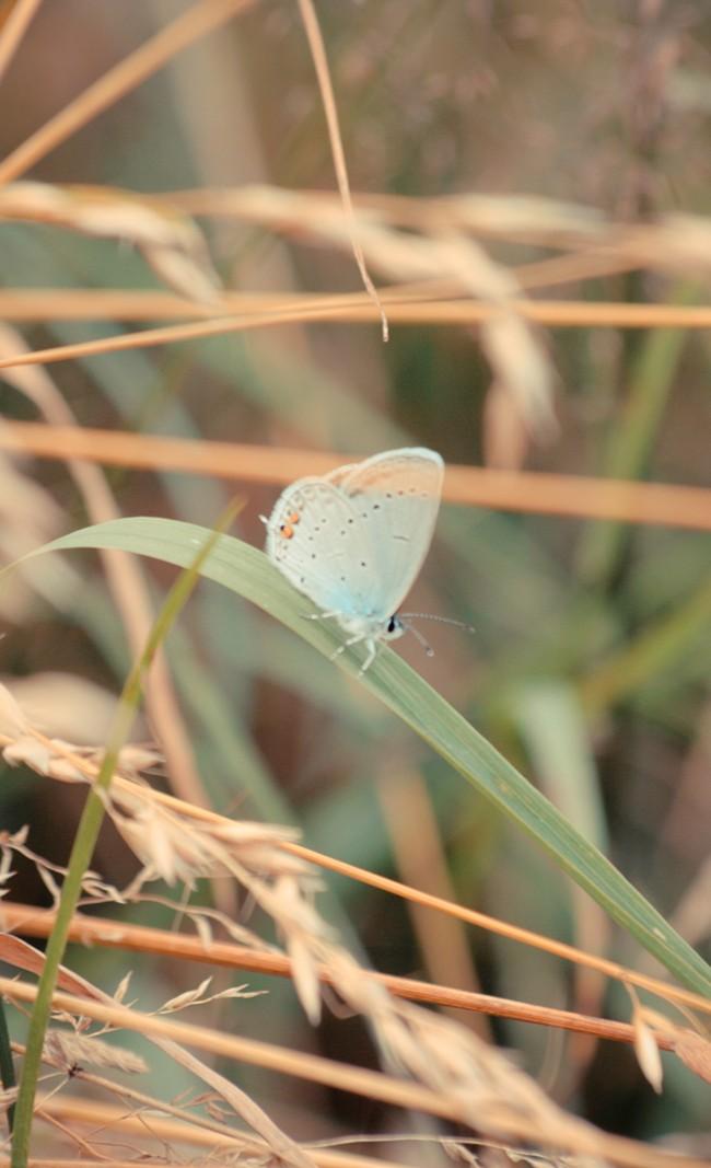 Papillon et brindilles