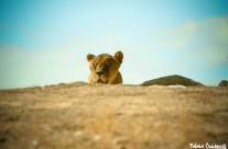 Lionne