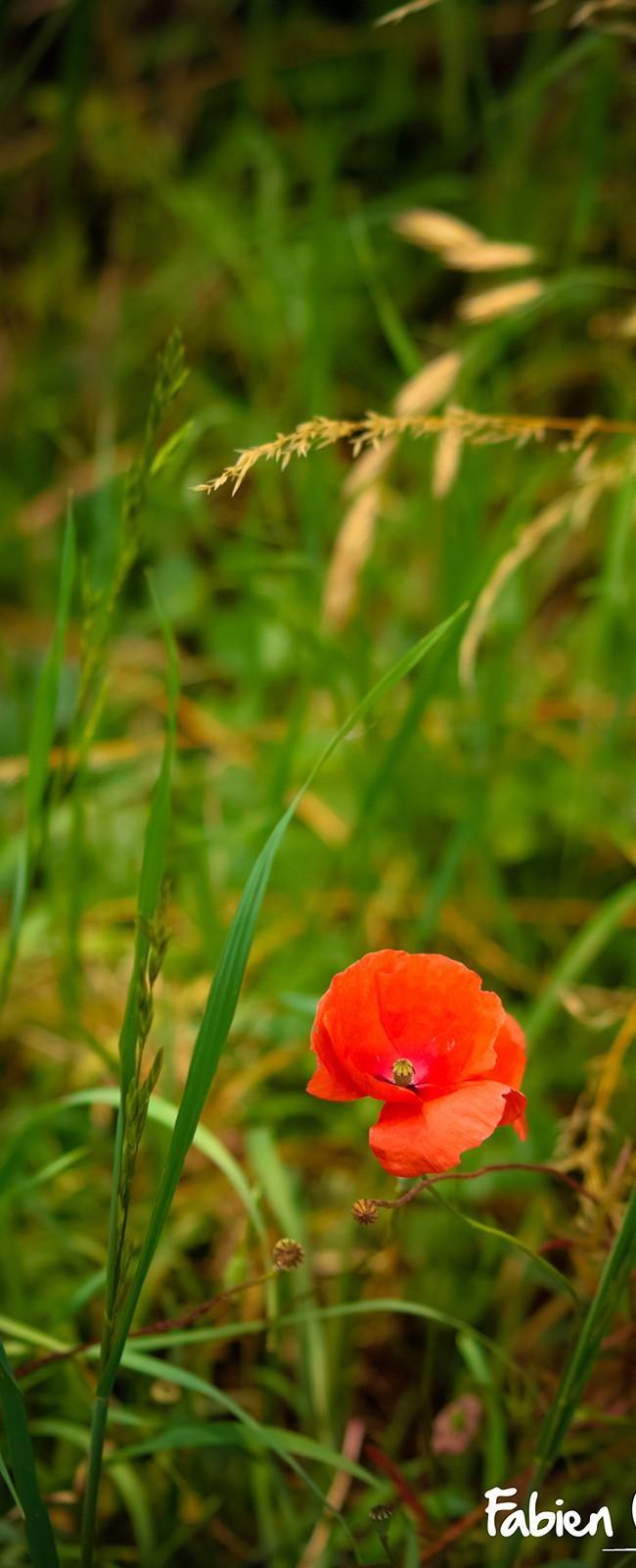 Alone In The Field